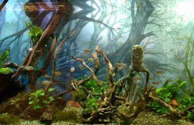 aquarium WaSC 2