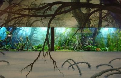 aquarium WaSC 8